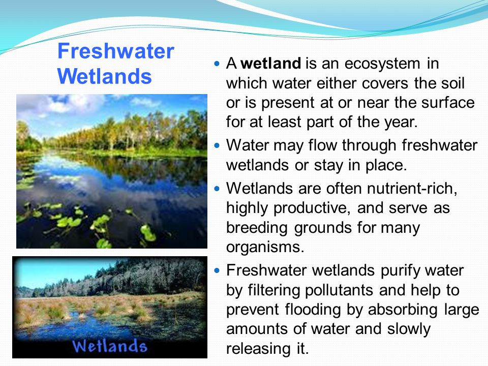 Freshwater Wetlands A wetland is an ecosystem in which water either covers the soil or is present at or near the surface for at least part of the year