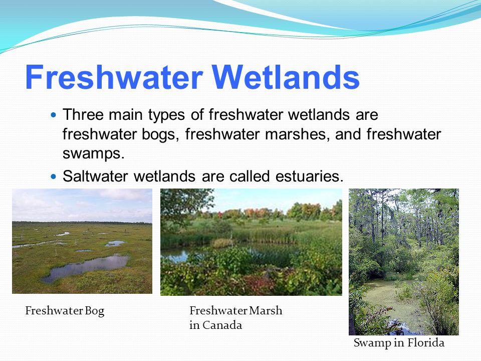Freshwater Wetlands Three main types of freshwater wetlands are freshwater bogs, freshwater marshes, and freshwater swamps. Saltwater wetlands are cal