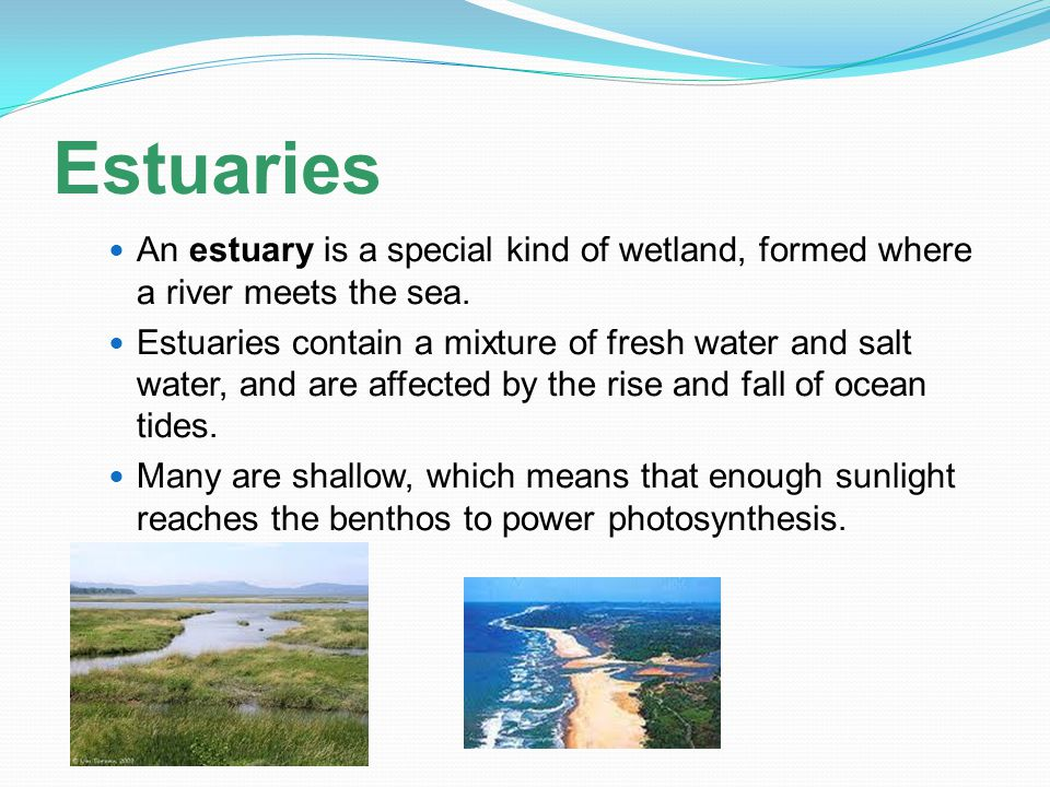 Estuaries An estuary is a special kind of wetland, formed where a river meets the sea. Estuaries contain a mixture of fresh water and salt water, and