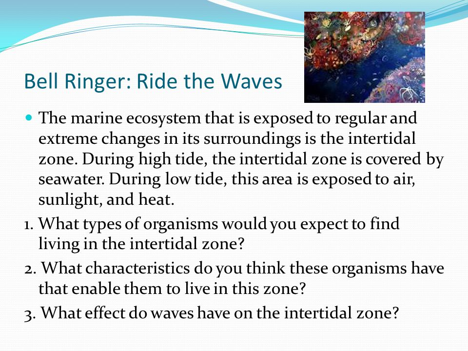 Bell Ringer: Ride the Waves The marine ecosystem that is exposed to regular and extreme changes in its surroundings is the intertidal zone. During hig