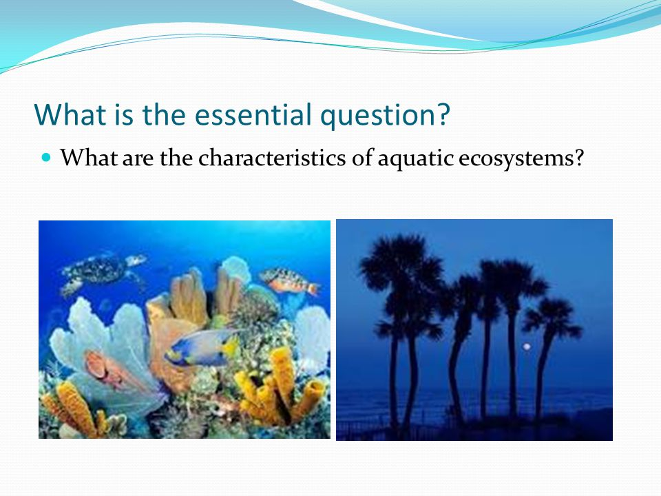 What is the essential question? What are the characteristics of aquatic ecosystems?