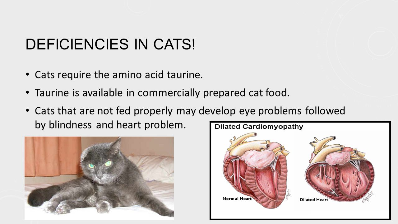 DEFICIENCIES IN CATS. Cats require the amino acid taurine.