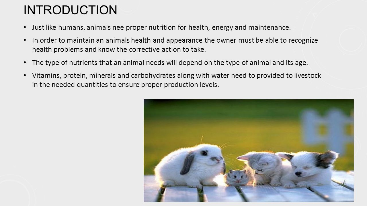 PROPER NUTRITION REQUIREMENTS The most important part of every animals diet is water.