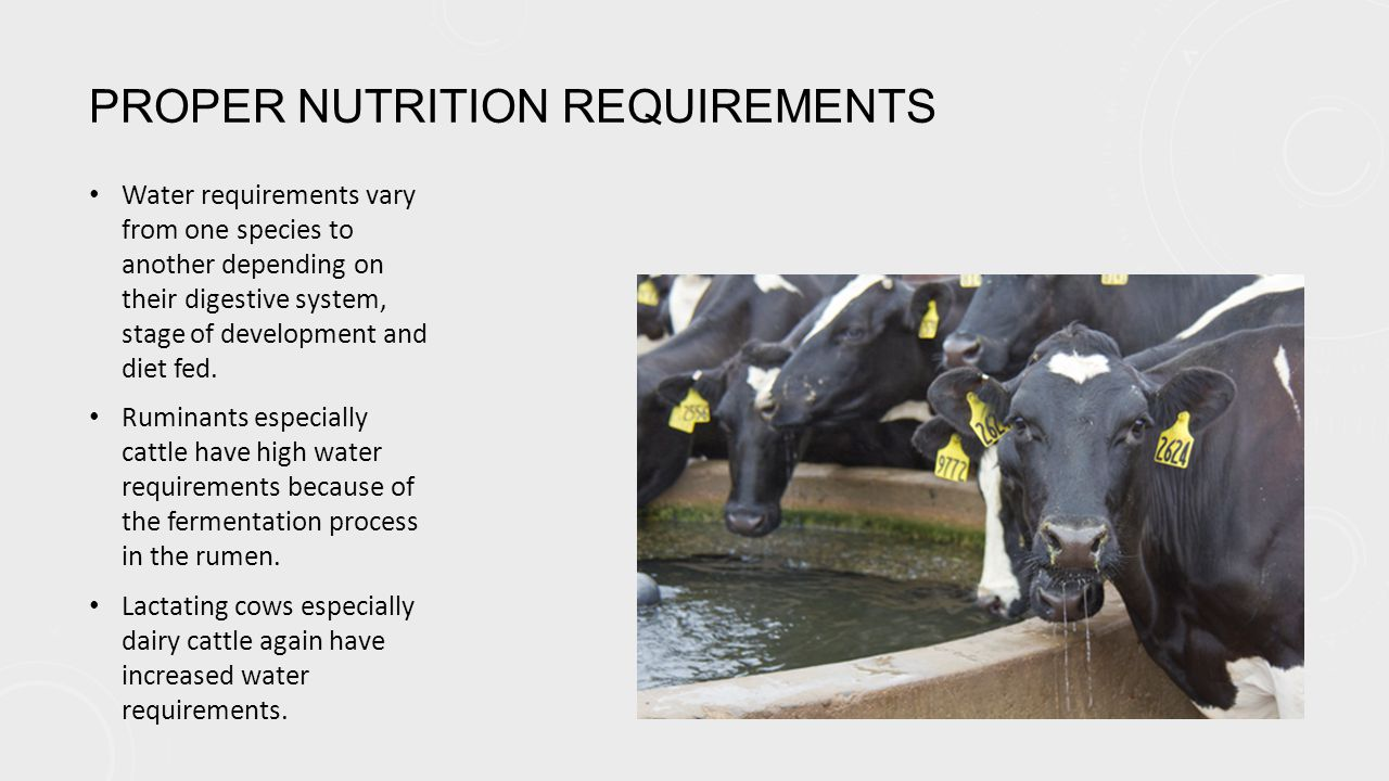 PROPER NUTRITION REQUIREMENTS Water requirements vary from one species to another depending on their digestive system, stage of development and diet fed.