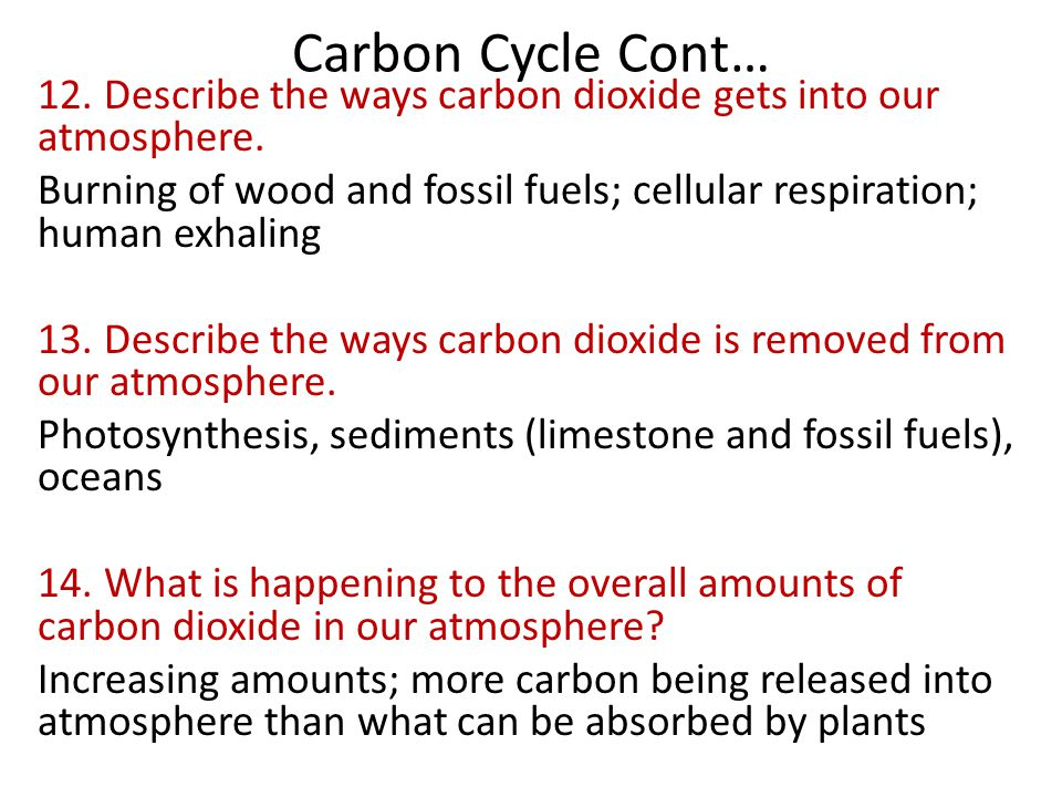 Carbon Cycle Cont… 12. Describe the ways carbon dioxide gets into our atmosphere. Burning of wood and fossil fuels; cellular respiration; human exhali