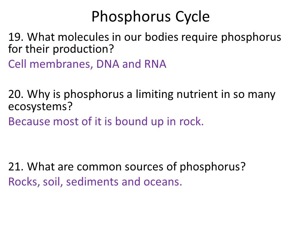 Phosphorus Cycle 19. What molecules in our bodies require phosphorus for their production? Cell membranes, DNA and RNA 20. Why is phosphorus a limitin