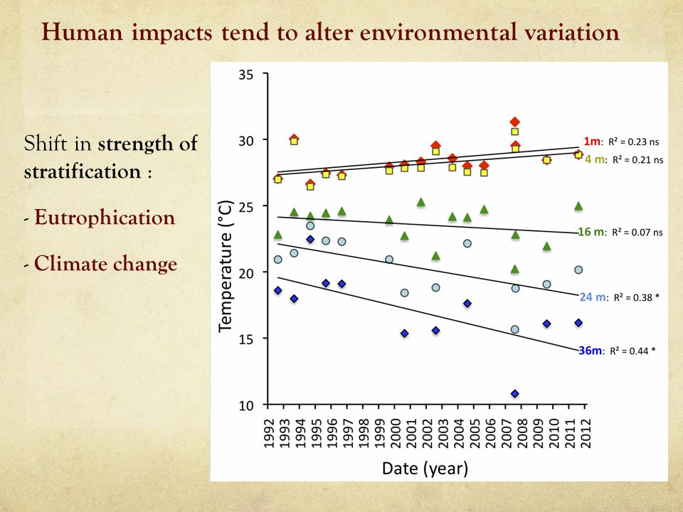 Shift in strength of stratification : - Eutrophication - Climate change Human impacts tend to alter environmental variation