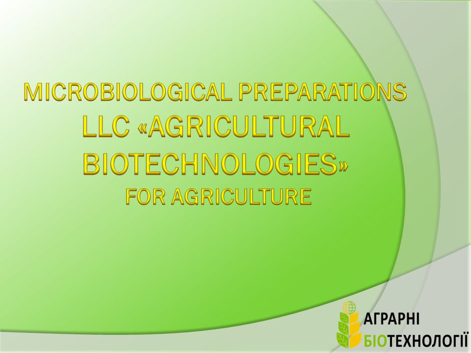 Application effect: TRIHODERMIN BT decompose the crop residues that is enclosing the cellulose.