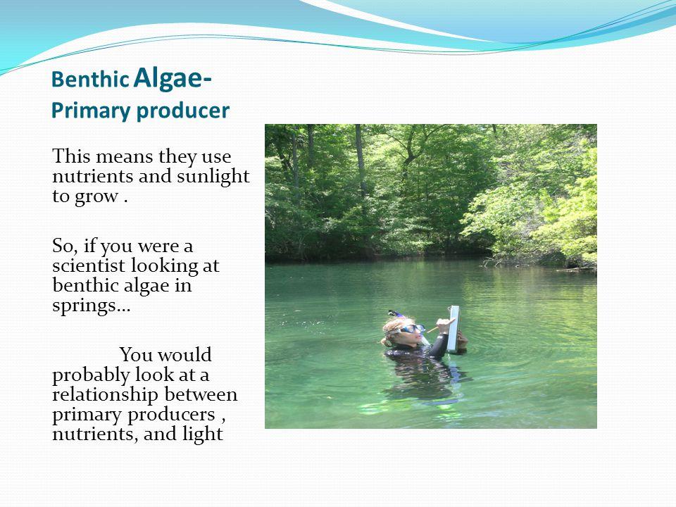 Snails & benthic algae Oxygen Mediated Grazing Impacts In Florida Springs Kristen Dormjo (UF, thesis, 2007) Grazing impacts on algae from the snail, Elimia floridensis http://www.flmnh.ufl.edu