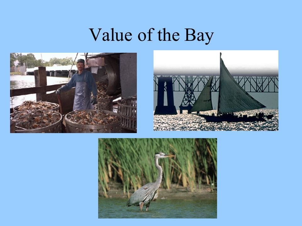 Value of the Bay
