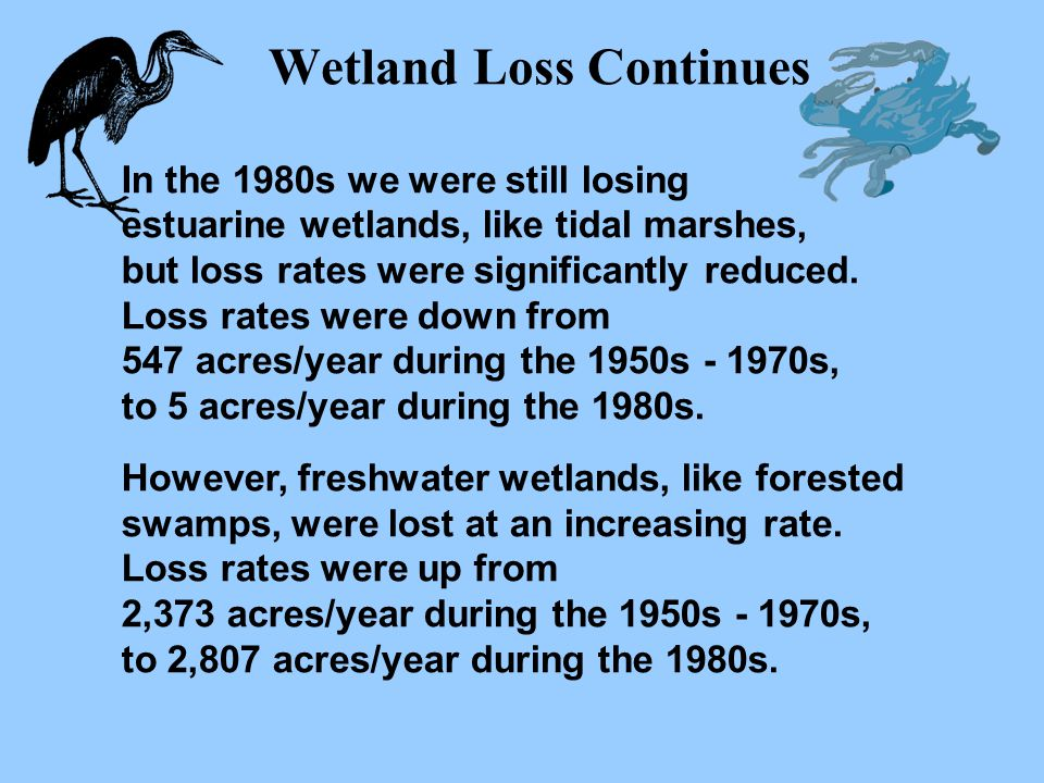 Wetland Loss Continues In the 1980s we were still losing estuarine wetlands, like tidal marshes, but loss rates were significantly reduced. Loss rates
