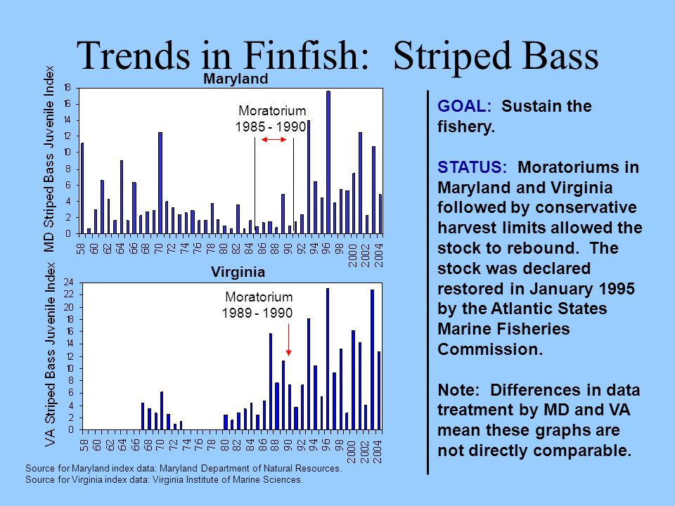 Trends in Finfish: Striped Bass GOAL: Sustain the fishery. STATUS: Moratoriums in Maryland and Virginia followed by conservative harvest limits allowe