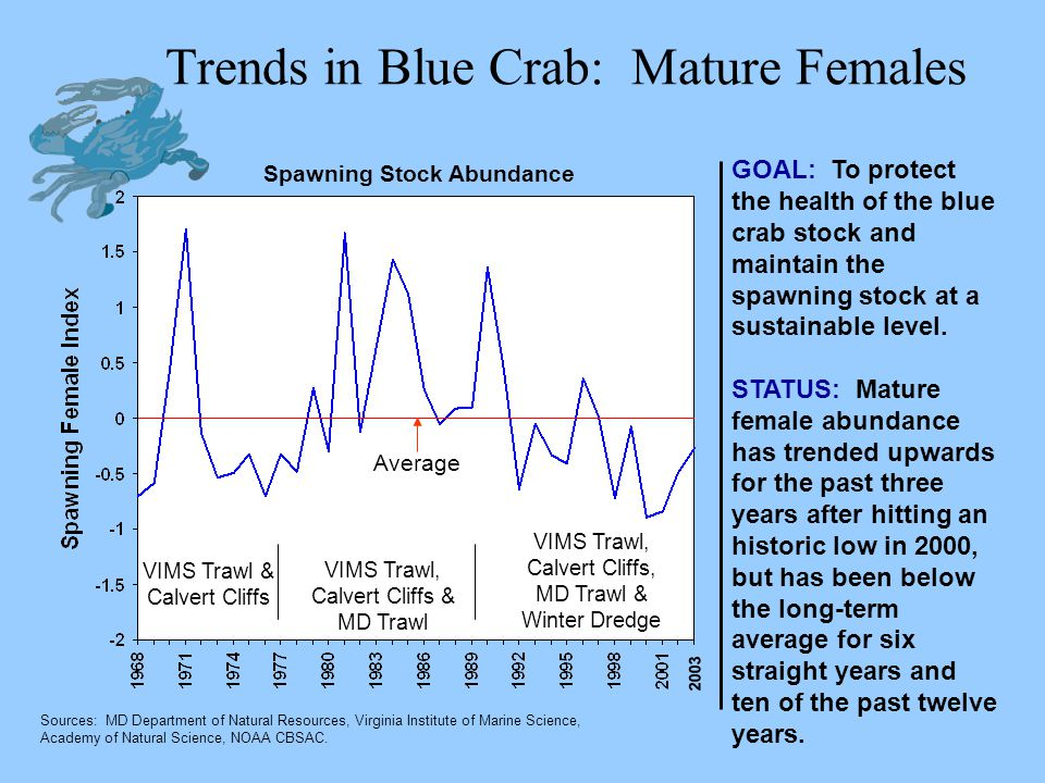 Trends in Blue Crab: Mature Females GOAL: To protect the health of the blue crab stock and maintain the spawning stock at a sustainable level. STATUS: