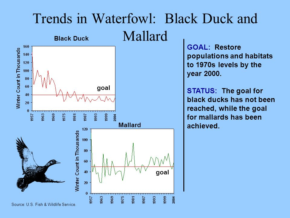 Trends in Waterfowl: Black Duck and Mallard GOAL: Restore populations and habitats to 1970s levels by the year 2000.
