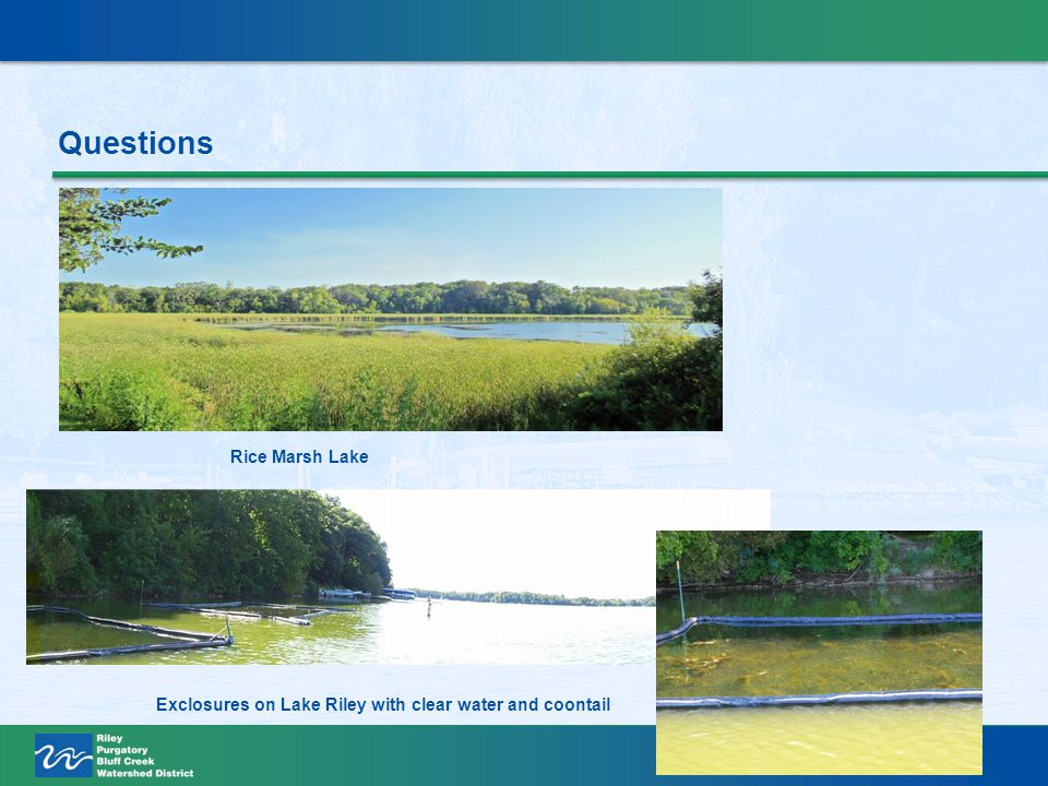 Questions Rice Marsh Lake Exclosures on Lake Riley with clear water and coontail