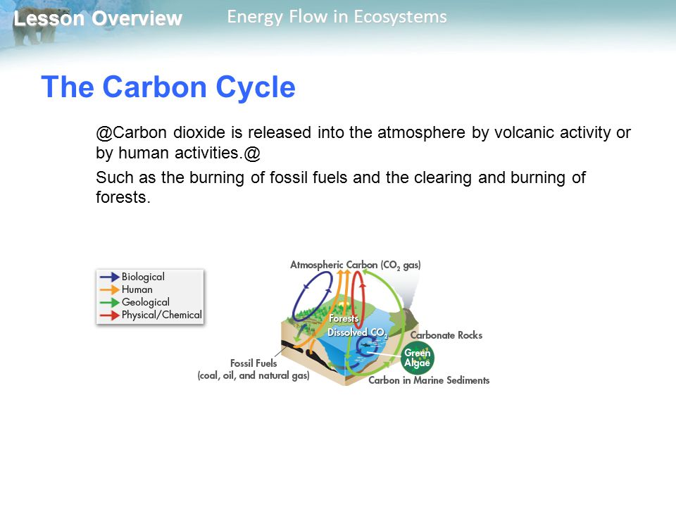 Lesson Overview Lesson Overview Energy Flow in Ecosystems The Carbon Cycle @Carbon dioxide is released into the atmosphere by volcanic activity or by