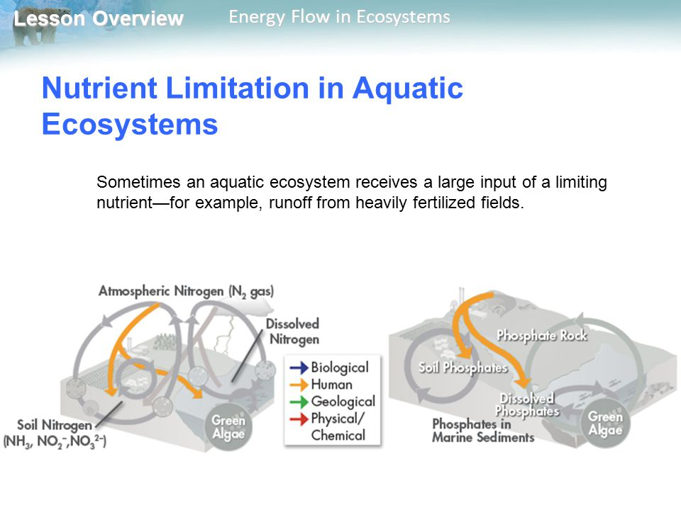 Lesson Overview Lesson Overview Energy Flow in Ecosystems Nutrient Limitation in Aquatic Ecosystems Sometimes an aquatic ecosystem receives a large in
