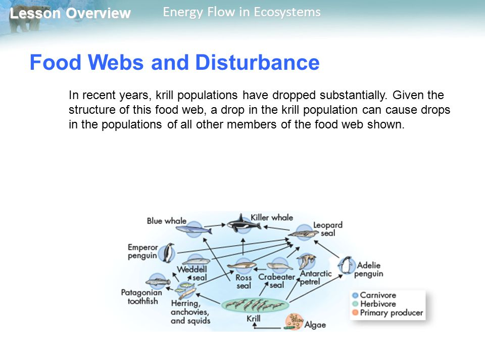 Lesson Overview Lesson Overview Energy Flow in Ecosystems Food Webs and Disturbance In recent years, krill populations have dropped substantially. Giv