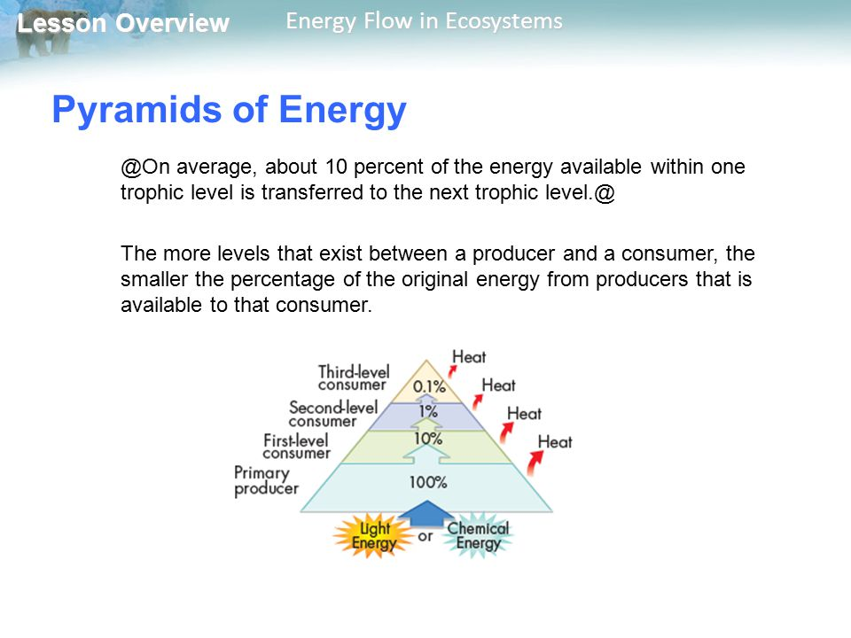 Lesson Overview Lesson Overview Energy Flow in Ecosystems Pyramids of Energy @On average, about 10 percent of the energy available within one trophic