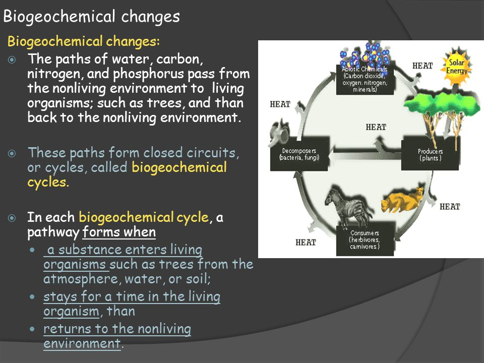 Biogeochemical changes Biogeochemical changes:  The paths of water, carbon, nitrogen, and phosphorus pass from the nonliving environment to living or