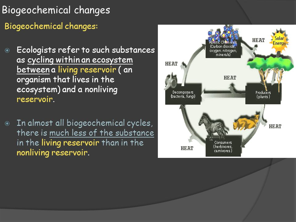 Biogeochemical changes Biogeochemical changes:  Ecologists refer to such substances as cycling within an ecosystem between a living reservoir ( an or