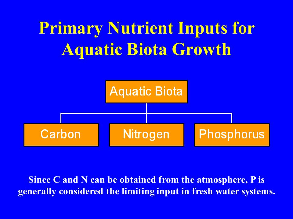 Primary Nutrient Inputs for Aquatic Biota Growth Since C and N can be obtained from the atmosphere, P is generally considered the limiting input in fresh water systems.