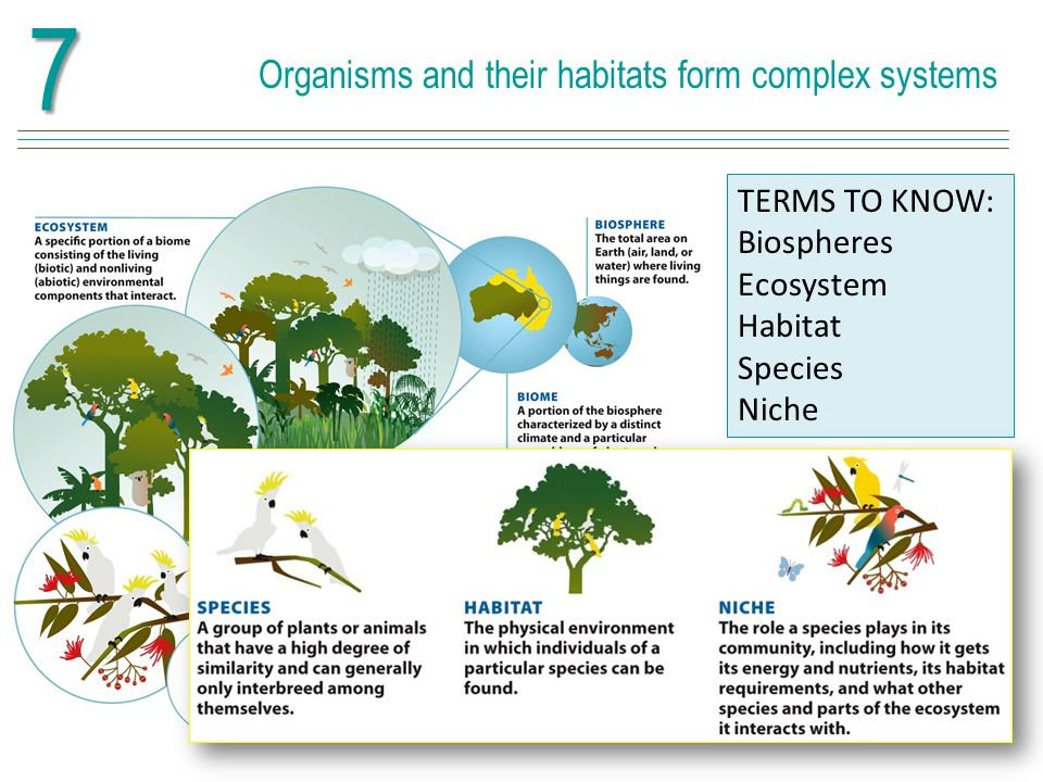Nutrients such as carbon cycle through ecosystems TERMS TO KNOW: Nitrogen fixation Phosphorus cycle Nitrogen and phosphorus are two additional chemicals that are essential for life.