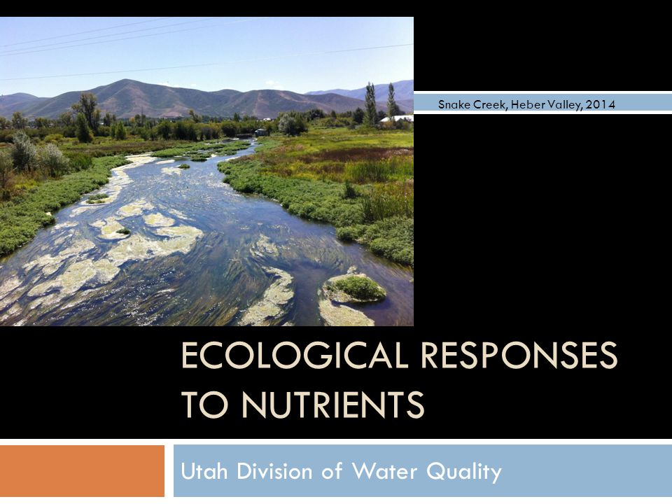 ECOLOGICAL RESPONSES TO NUTRIENTS Utah Division of Water Quality Snake Creek, Heber Valley, 2014