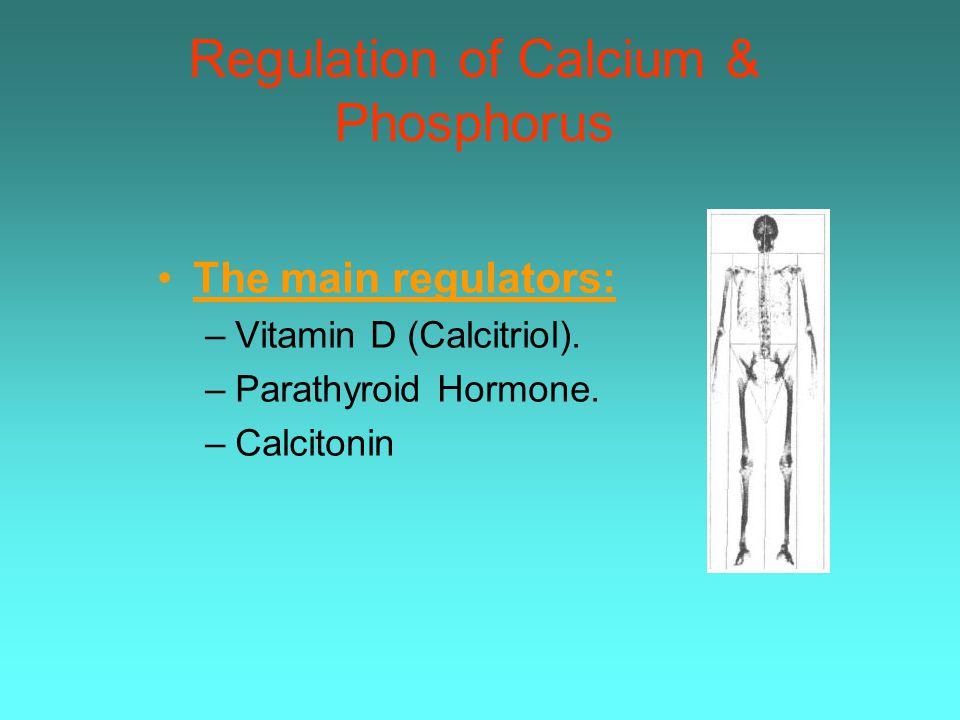 Regulation of Calcium & Phosphorus The main regulators: –Vitamin D (Calcitriol). –Parathyroid Hormone. –Calcitonin