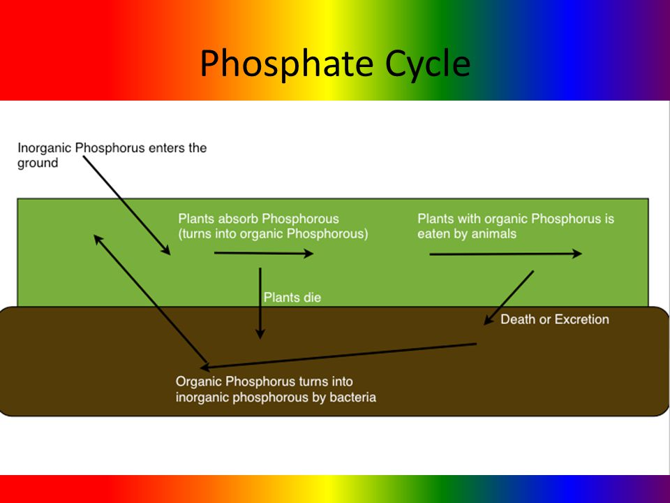 Phosphate Cycle and Carbon Emissions Brianna McCovey LeeAnn Fontes Toni Albaum Alex