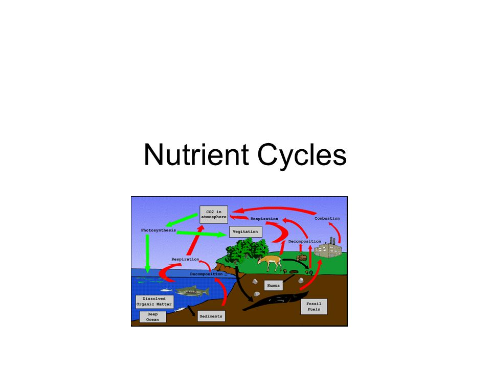 Biochemical cycles Also called the Nutrient Cycles.