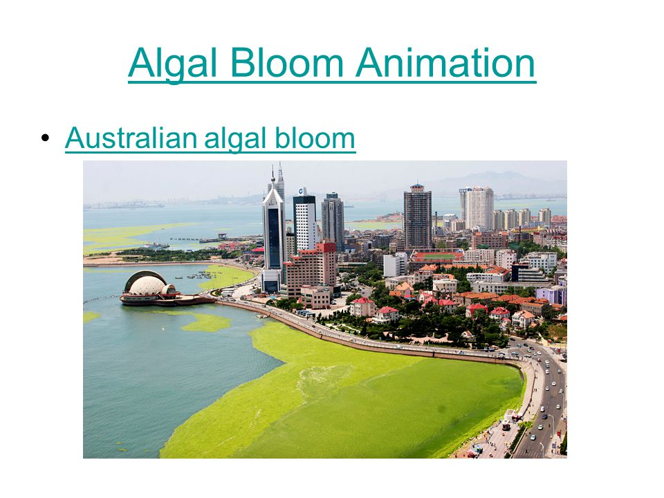 Algal Bloom Animation Australian algal bloom