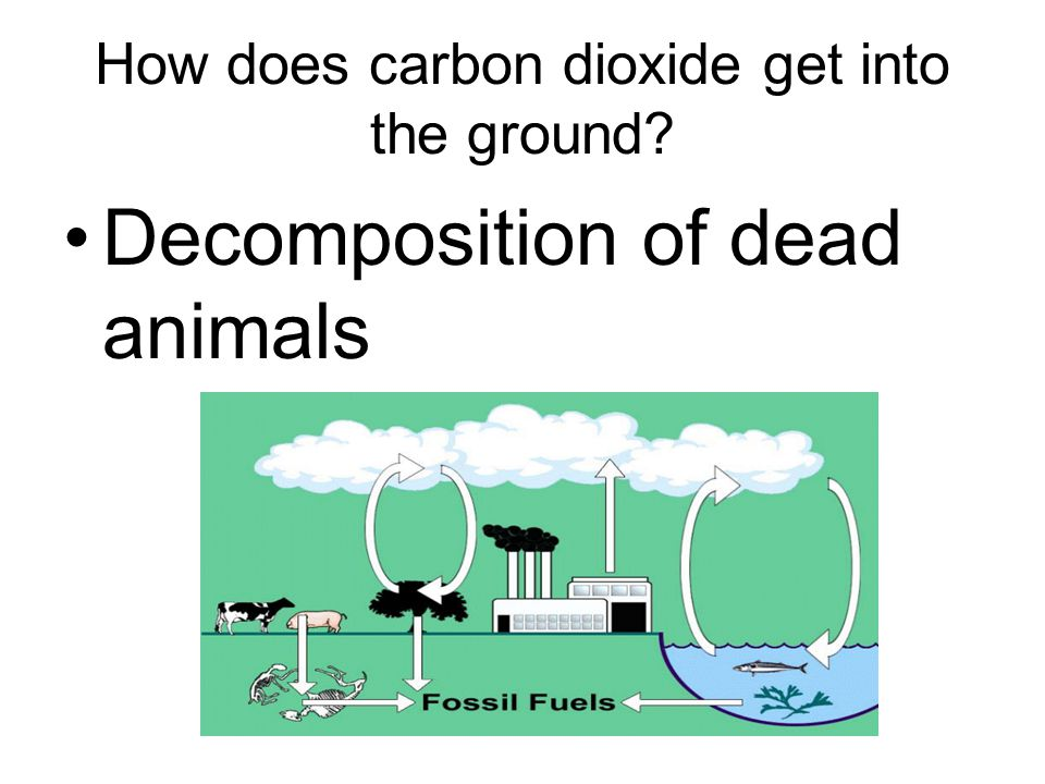 How does carbon dioxide get into the ground? Decomposition of dead animals