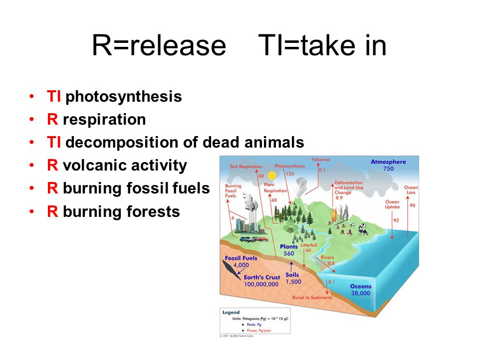 R=release TI=take in TI photosynthesis R respiration TI decomposition of dead animals R volcanic activity R burning fossil fuels R burning forests