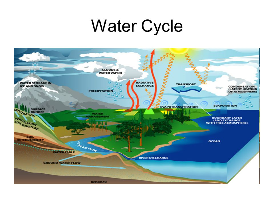 Why do you think Carbon is an important cycle.