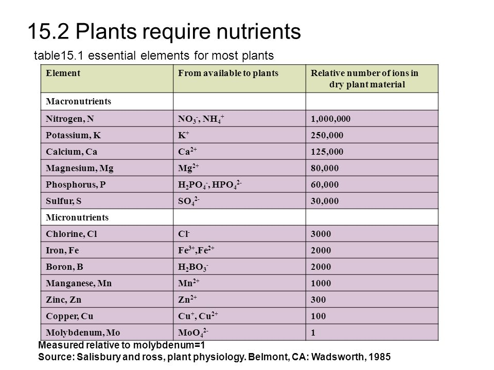 15.2 Plants require nutrients ElementFrom available to plantsRelative number of ions in dry plant material Macronutrients Nitrogen, NNO 3 -, NH 4 + 1,000,000 Potassium, KK+K+ 250,000 Calcium, CaCa 2+ 125,000 Magnesium, MgMg 2+ 80,000 Phosphorus, PH 2 PO 4 -, HPO 4 2- 60,000 Sulfur, SSO 4 2- 30,000 Micronutrients Chlorine, ClCl - 3000 Iron, FeFe 3+,Fe 2+ 2000 Boron, BH 2 BO 3 - 2000 Manganese, MnMn 2+ 1000 Zinc, ZnZn 2+ 300 Copper, CuCu +, Cu 2+ 100 Molybdenum, MoMoO 4 2- 1 table15.1 essential elements for most plants Measured relative to molybdenum=1 Source: Salisbury and ross, plant physiology.