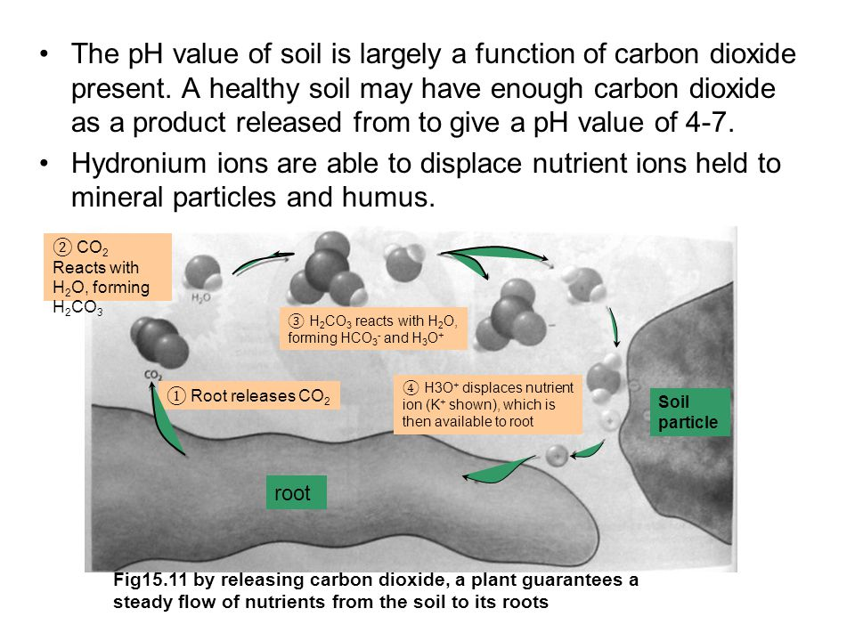 The pH value of soil is largely a function of carbon dioxide present.