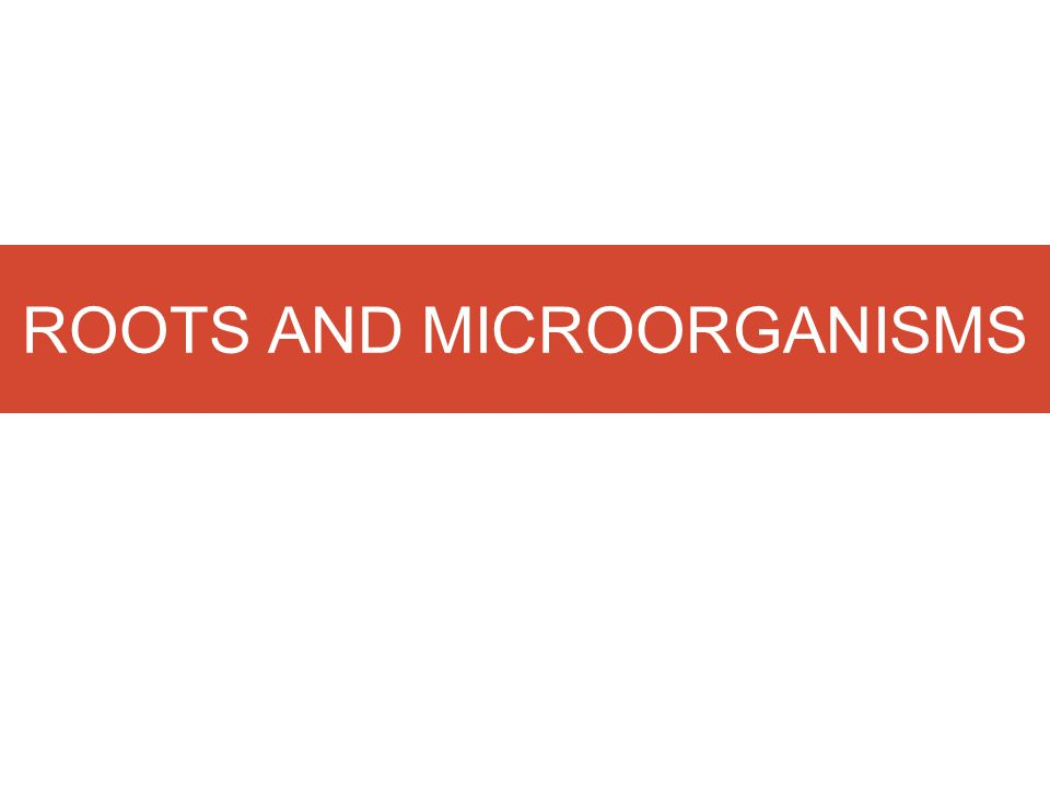 ROOTS AND MICROORGANISMS
