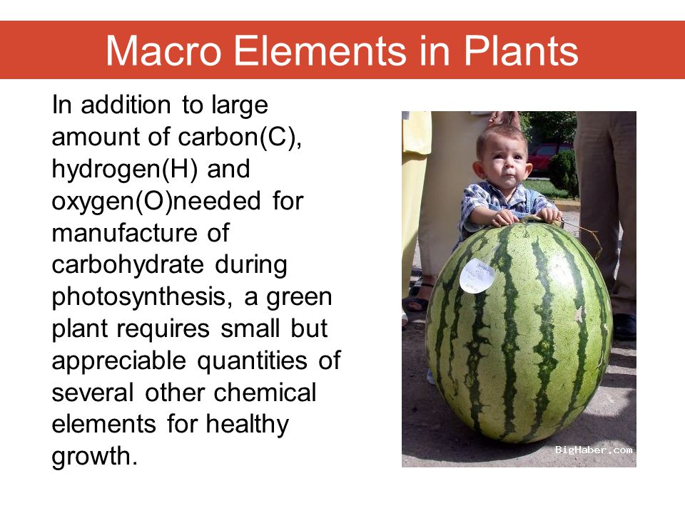Macro Elements in Plants In addition to large amount of carbon(C), hydrogen(H) and oxygen(O)needed for manufacture of carbohydrate during photosynthesis, a green plant requires small but appreciable quantities of several other chemical elements for healthy growth.