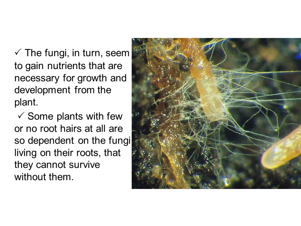  The fungi, in turn, seem to gain nutrients that are necessary for growth and development from the plant.