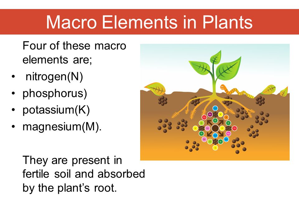Macro Elements in Plants Four of these macro elements are; nitrogen(N) phosphorus) potassium(K) magnesium(M). They are present in fertile soil and abs