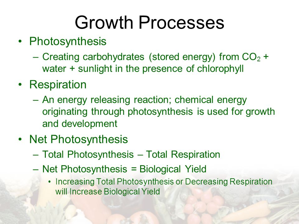 Growth Processes Photosynthesis –Creating carbohydrates (stored energy) from CO 2 + water + sunlight in the presence of chlorophyll Respiration –An energy releasing reaction; chemical energy originating through photosynthesis is used for growth and development Net Photosynthesis –Total Photosynthesis – Total Respiration –Net Photosynthesis = Biological Yield Increasing Total Photosynthesis or Decreasing Respiration will Increase Biological Yield