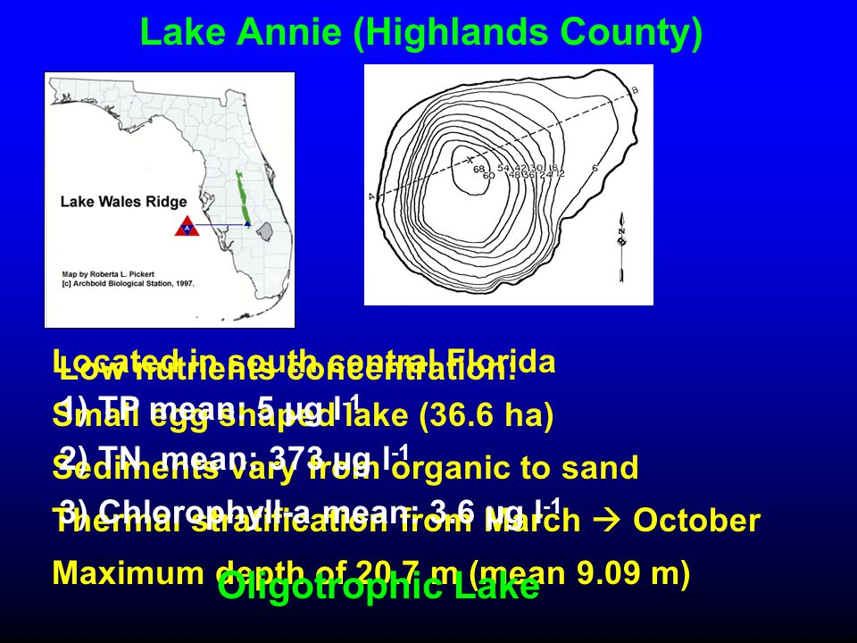 Lake Annie (Highlands County) Located in south central Florida Small egg shaped lake (36.6 ha) Sediments vary from organic to sand Thermal stratification from March  October Maximum depth of 20.7 m (mean 9.09 m) Oligotrophic Lake Low nutrients concentration: 1) TP mean: 5 µg l -1 2) TN mean: 373 µg l -1 3) Chlorophyll-a mean: 3.6 µg l -1