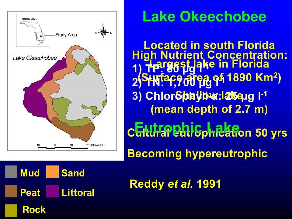 Lake Okeechobee Cultural eutrophication 50 yrs Becoming hypereutrophic Littoral Mud Peat Sand Rock Located in south Florida Largest lake in Florida (S