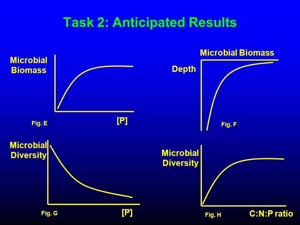 Task 2: Anticipated Results Microbial Biomass [P] Fig. E Microbial Biomass Depth Fig. F Microbial Diversity C:N:P ratio Fig. H Microbial Diversity [P]