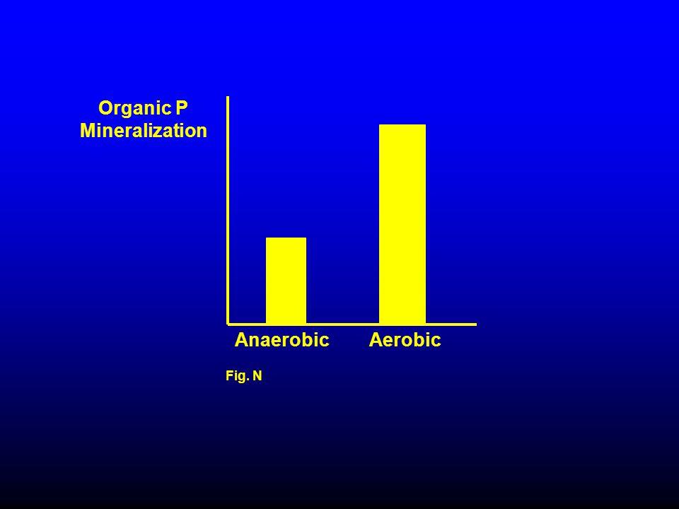 Organic P Mineralization Fig. N Anaerobic Aerobic