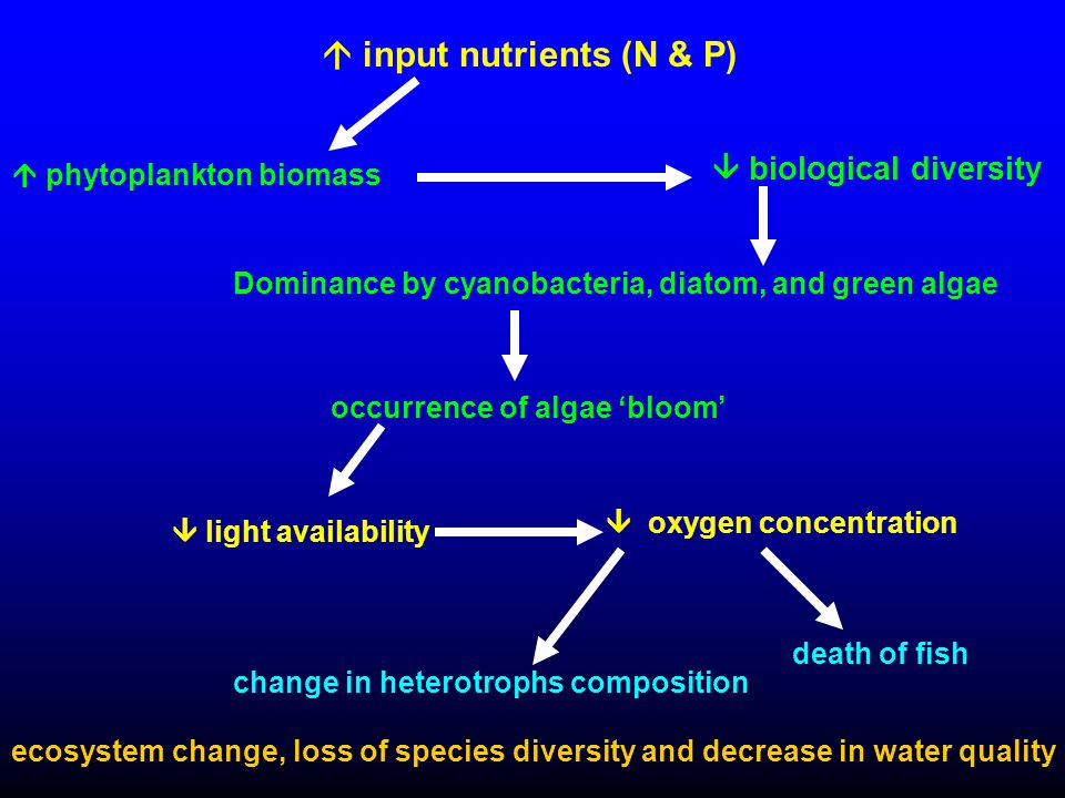 Dominance by cyanobacteria, diatom, and green algae  input nutrients (N & P)  light availability  phytoplankton biomass  biological diversity occurrence of algae 'bloom'  oxygen concentration change in heterotrophs composition death of fish ecosystem change, loss of species diversity and decrease in water quality