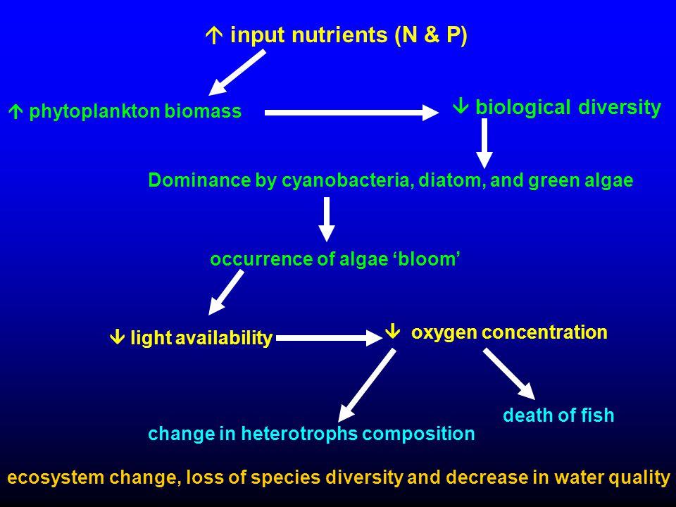 Dominance by cyanobacteria, diatom, and green algae  input nutrients (N & P)  light availability  phytoplankton biomass  biological diversity occu