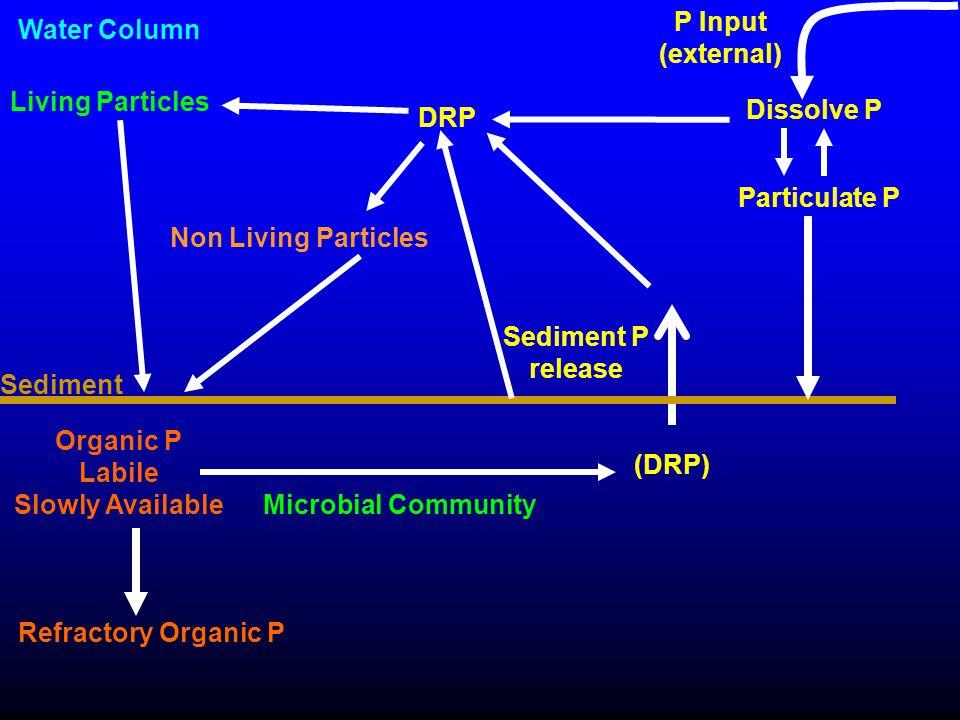 Microbial Community Organic P Labile Slowly Available (DRP) Refractory Organic P Sediment Sediment P release DRP Water Column P Input (external) Livin