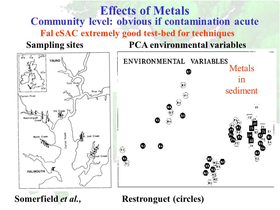 Fal, Tamar, Poole, Severn Infaunal species such as Nereis, provide useful information on bioavailability in estuarine sediments: Fal, Tamar, Poole, Se